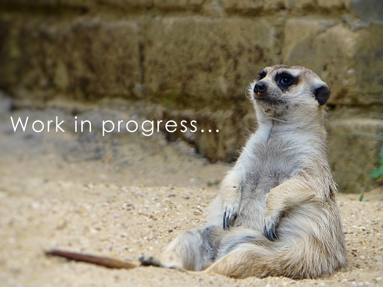 Meerkat Work in Progress.jpg