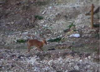 Cropped deer.jpg